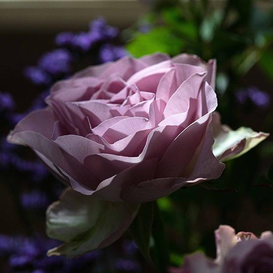 """5"""" Square Card - Violet Rose."""