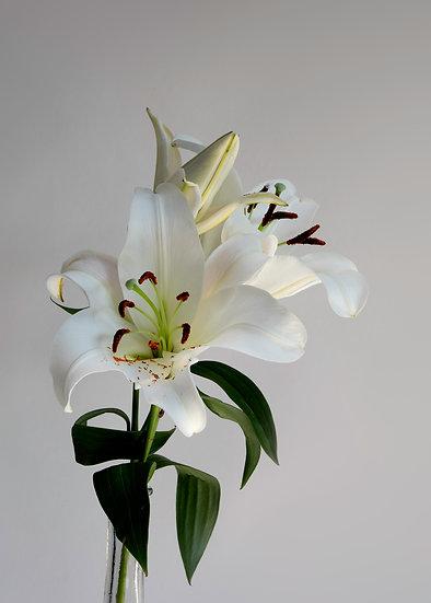 "7 x 5"" Portrait Card - White Lilies"