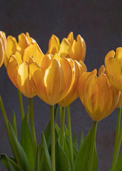 "7 x 5"" Portrait Card - Orange Tulips."