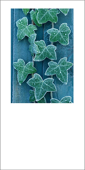 """8 x 4"""" Card - Frost Edged Ivy"""