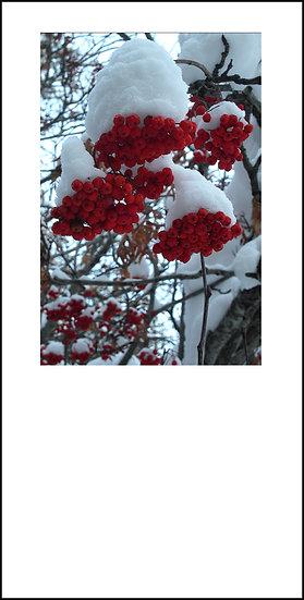 "8 x 4"" Card - Rowan Berries"