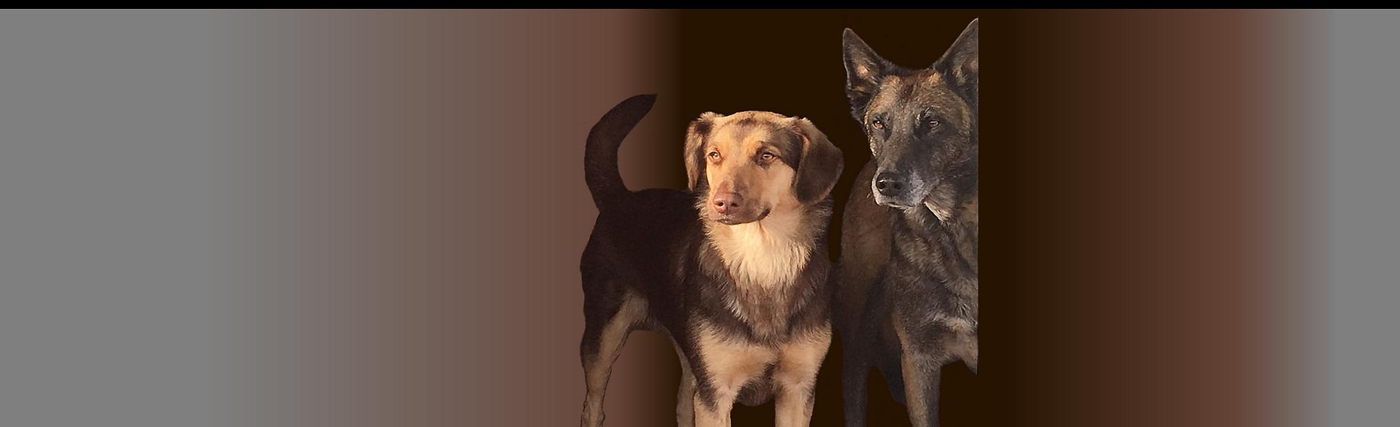 Hundeschule Aiken