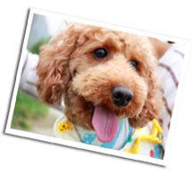 犬の歯磨き|ペットの歯磨き|犬の歯みがき|犬の歯磨き教室|犬の歯みがきレッスン|大阪|奈良|柏原市