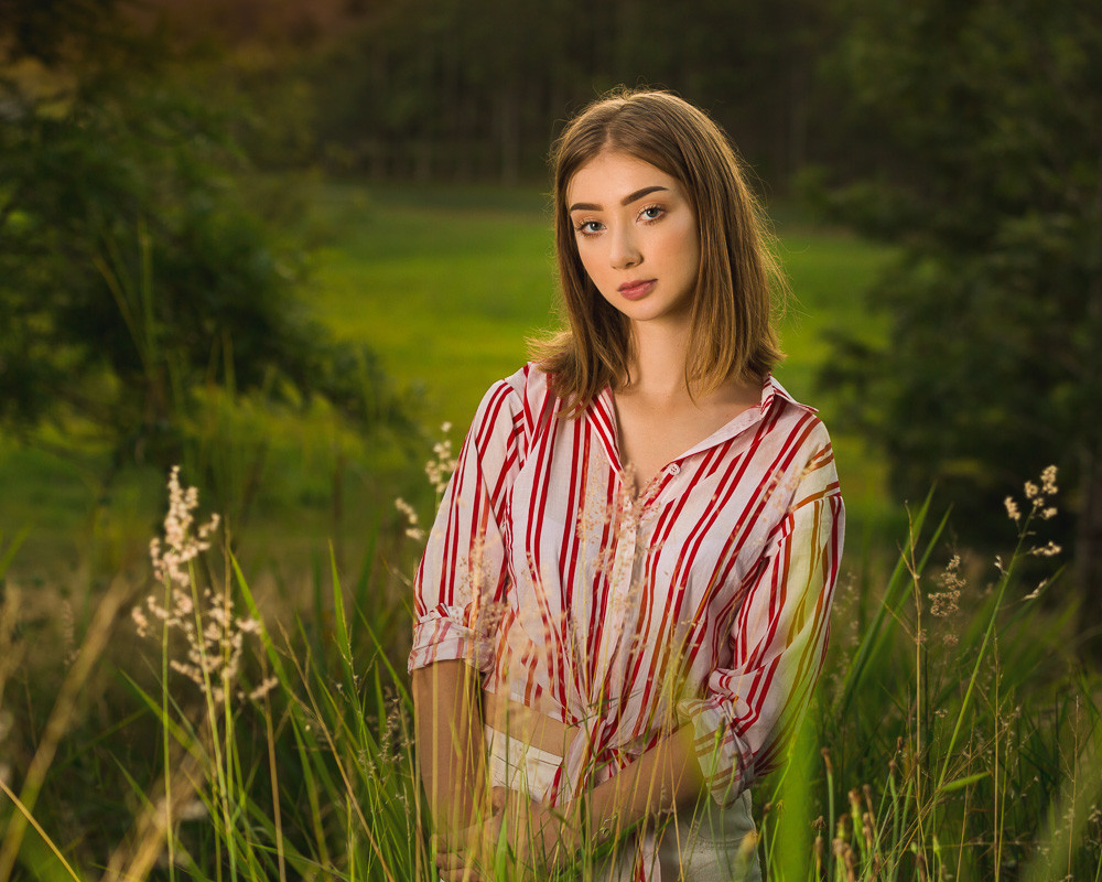 Golden hour in field of grass