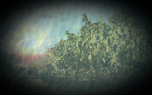 Vineyard_edited_edited_edited_edited_edi