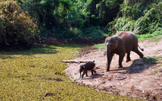 elephant-conservation.jpg
