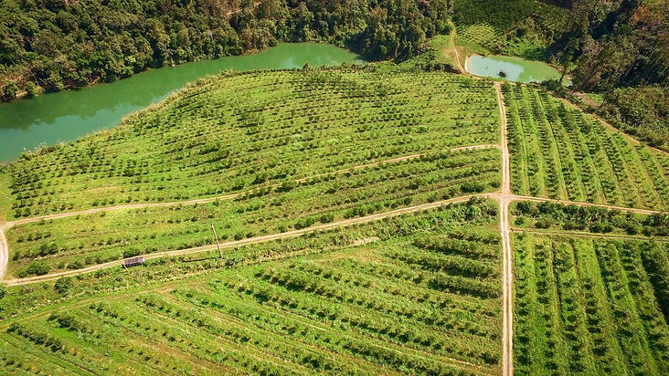 Freshy Farm, Louang Pra Bang, Laos