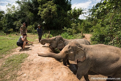 MandaLao-Elephant-Sanctuary-Luang-Praban