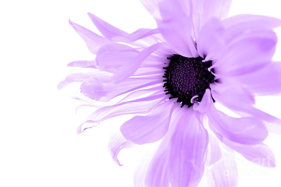Purple-Flower-18.jpg
