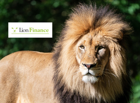 Want to become a LION in Finance?