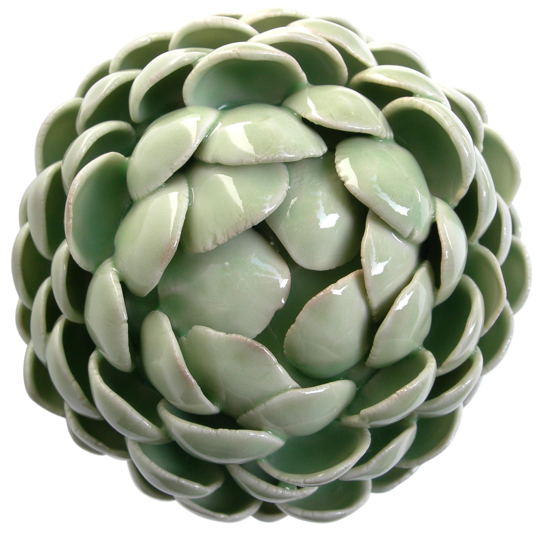 rotundus liliaceae