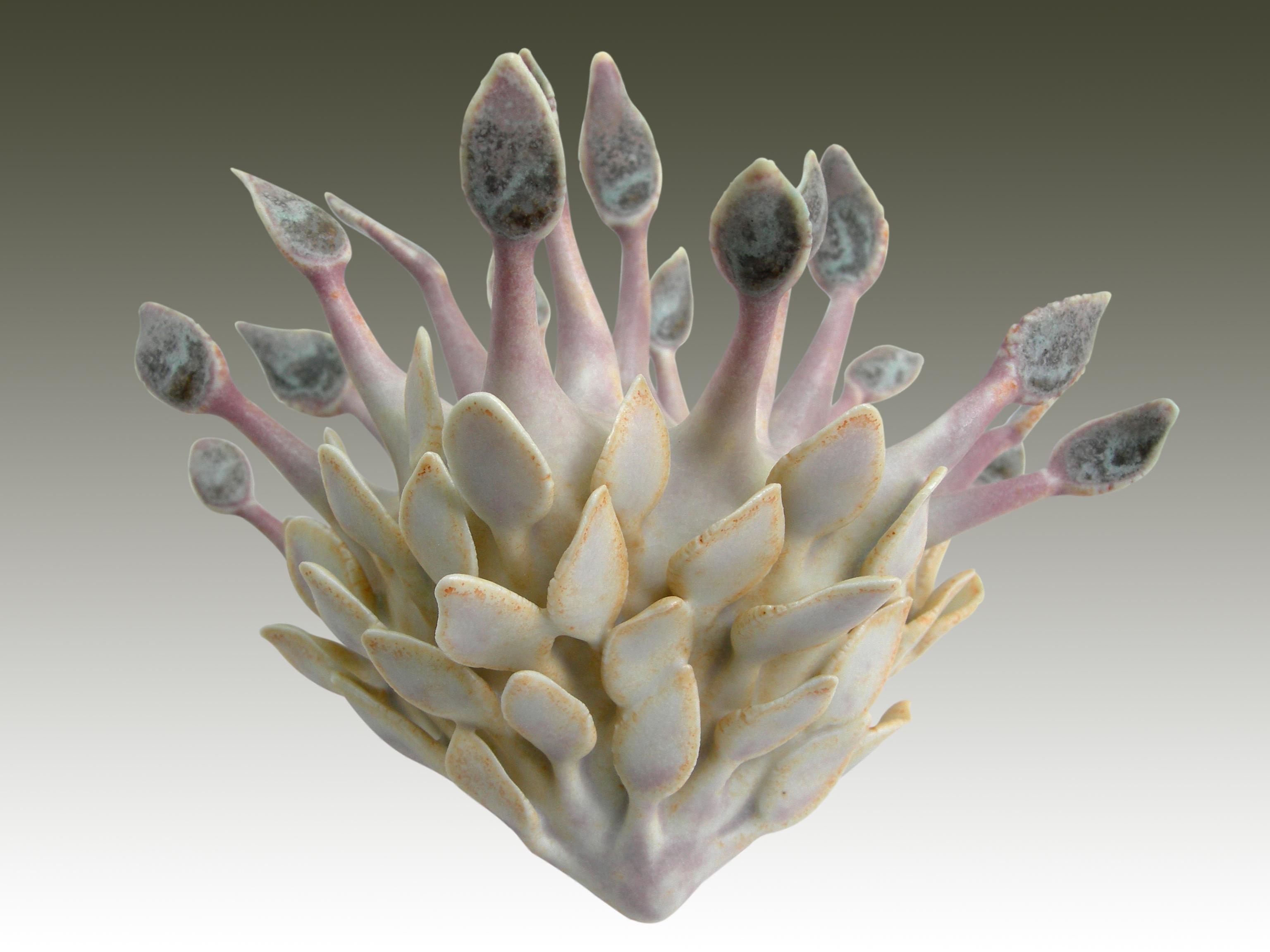 ascidianhastate