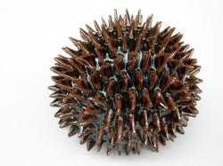 Fructus Echinata