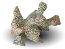 Spongia Cyprinoid