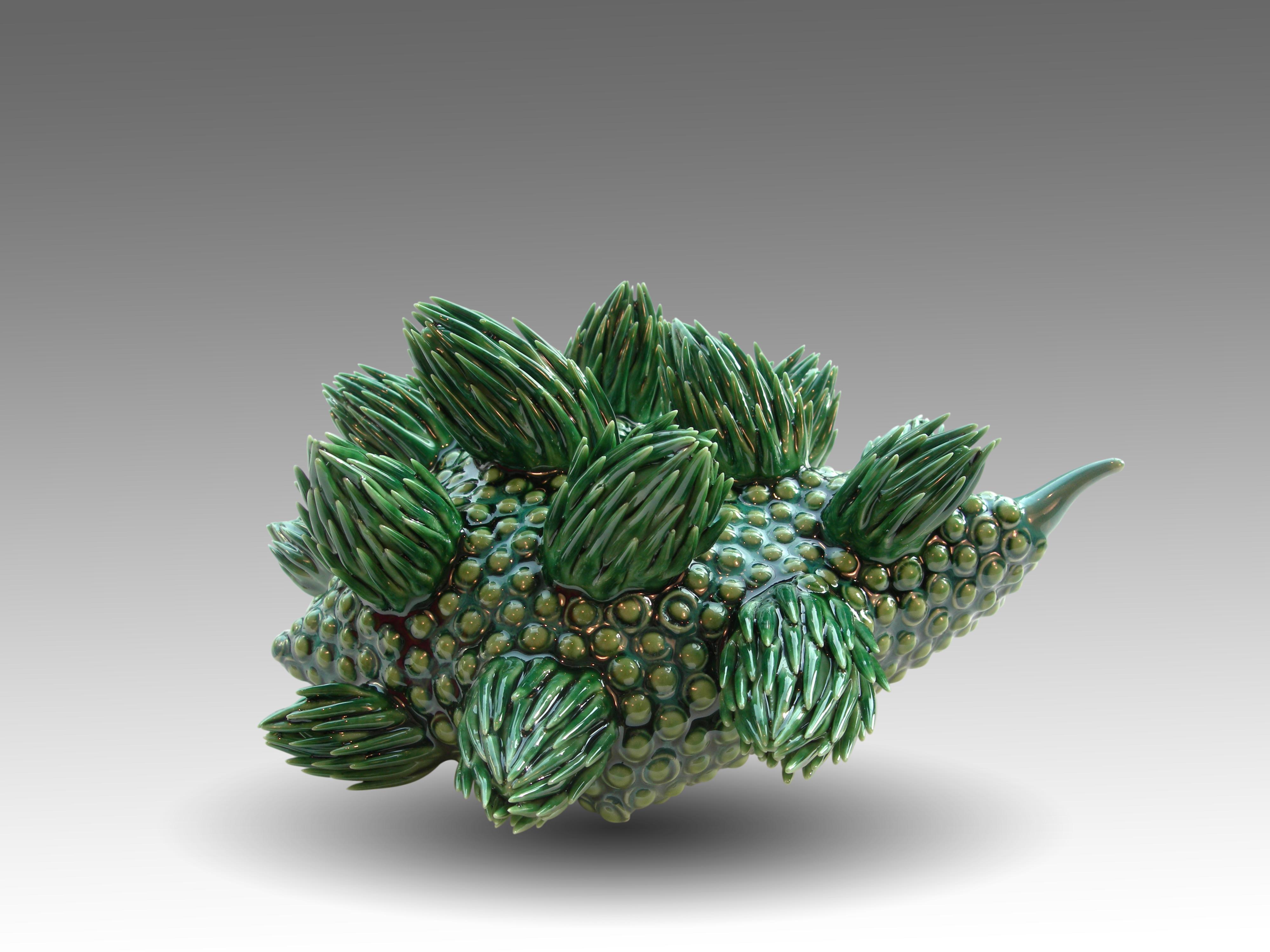 Sigillaria Cephaloculus