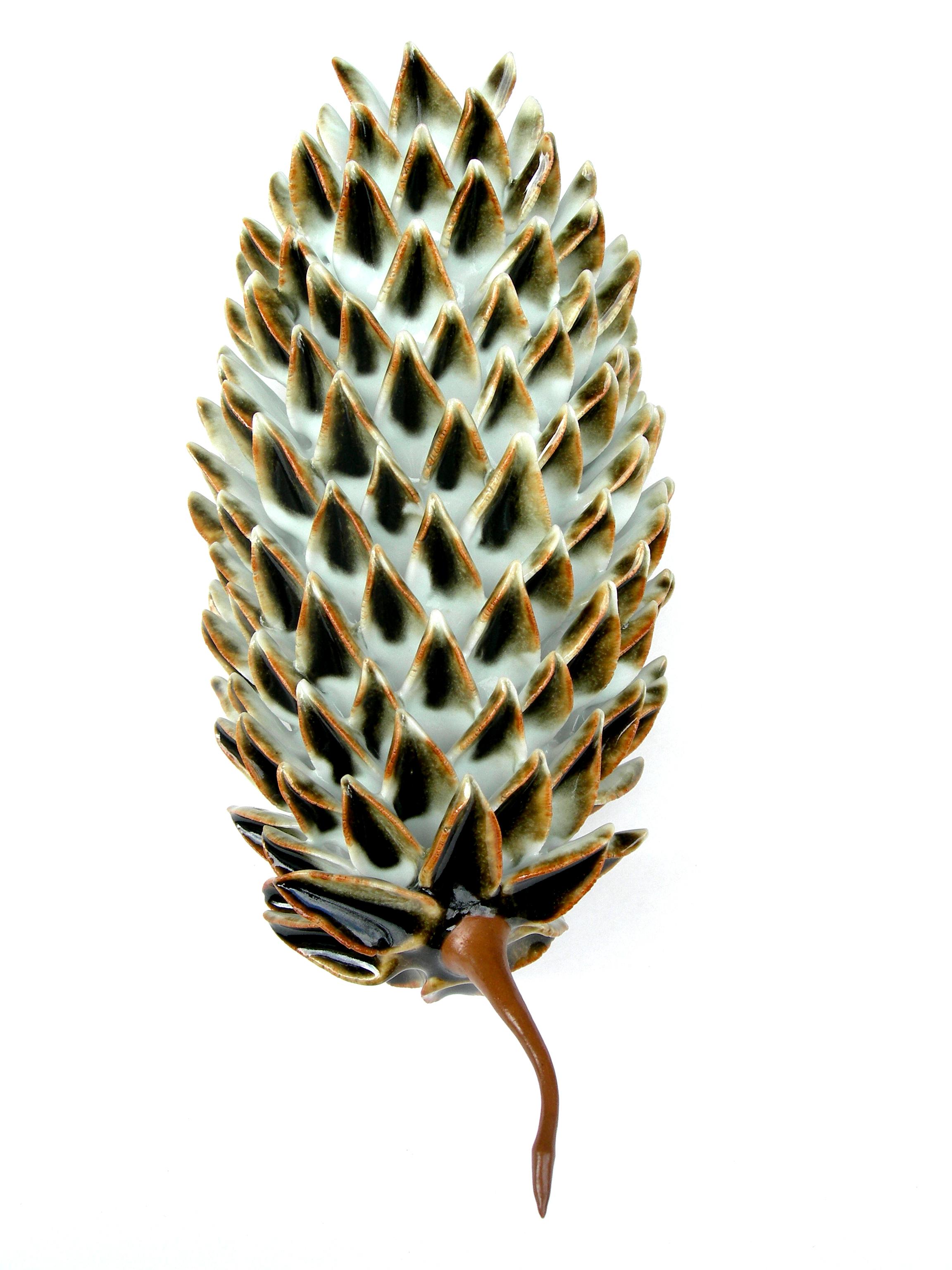 Pinus Strobus Rubiaceae