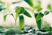 croissance nouvelle