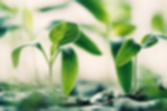 Agribody Technologies Landing Page #3 germinating plants