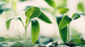 8 Career Opportunities from the Green Recovery Plan