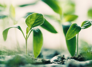 Planting a Seed: Five Reasons it Pays to Have an Off-Post Community