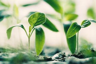 新たな成長