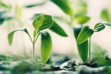 Neues Wachstum