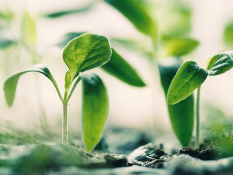 Humble Beginnings - My IWD Intro...