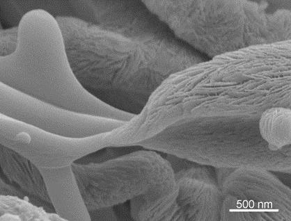 Mineralization of Recombinamer Fiber