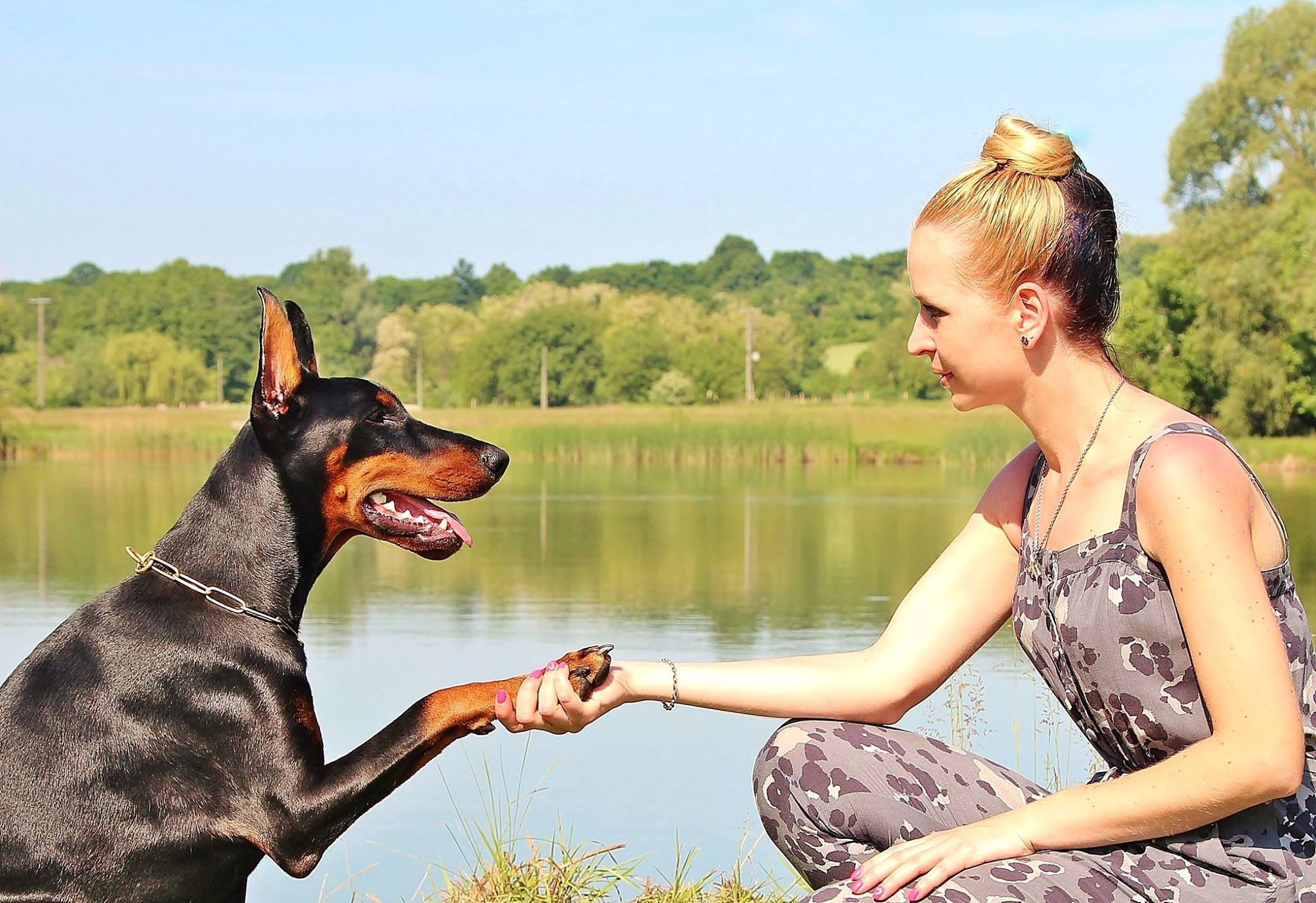 doberman shaking with owner