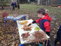 Leaf sorting in Forest School_.jpg