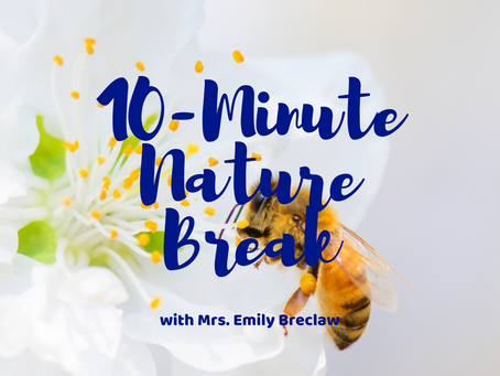 Friday, March 27 - Nature Break