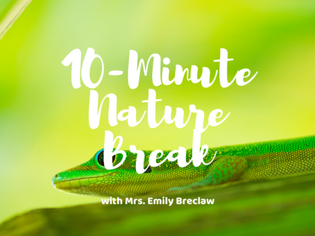 Wednesday, April 8 - Nature Break