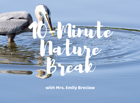 Friday, April 24 - Nature Break