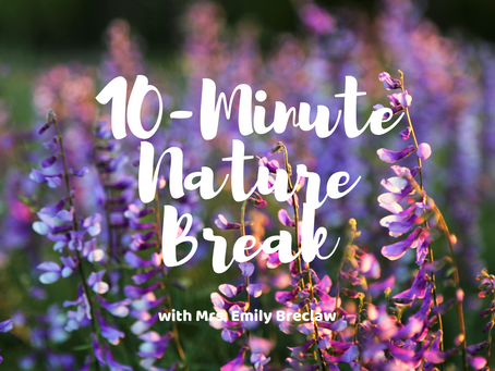 Thursday, March 19 - Nature Break