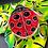 Thumbnail: Ladybug