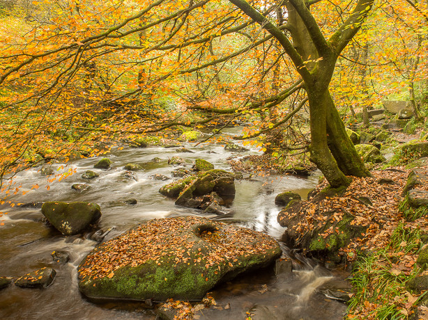 Hardcastle Crags, Autumn I