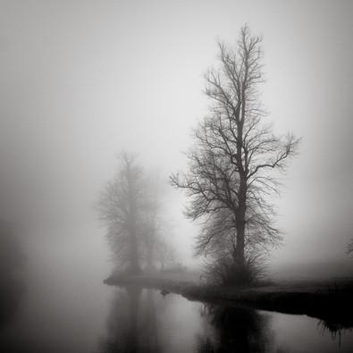 Misty Trees Berkshire II