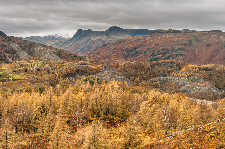 Langdale Pikes from Holme Fell I