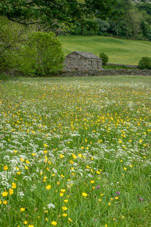 Swaledale Meadows V