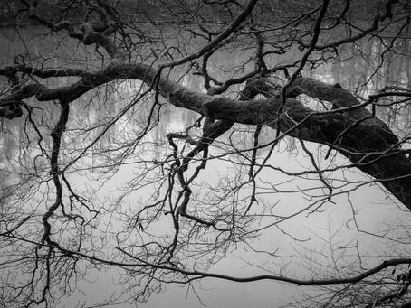 Cheshire Grey