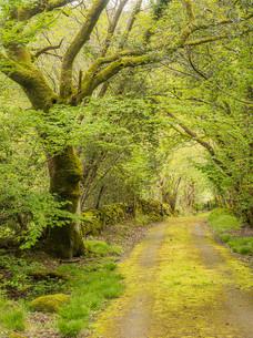 Green Lane I