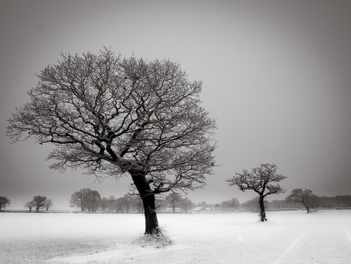 Three Trees Cheshire