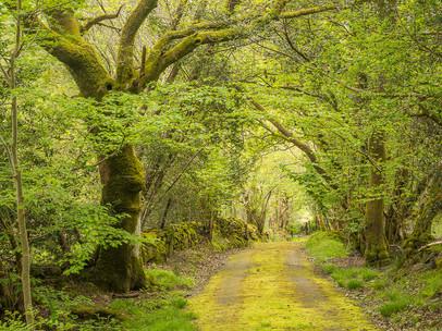 Green Lane II