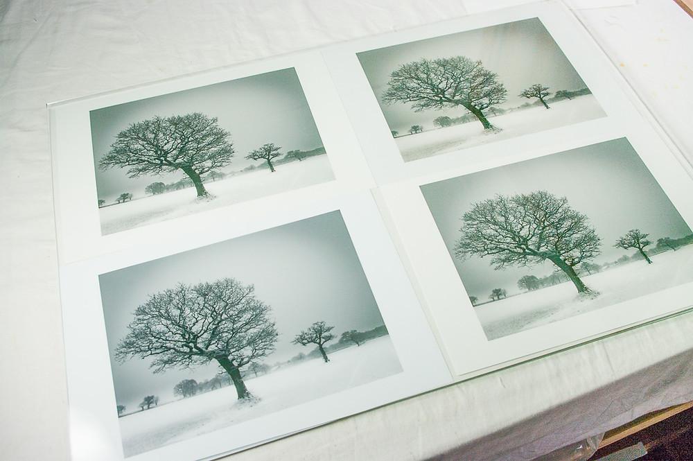Four monochrome prints put behind glass for comparison