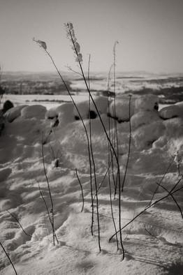 Snow Study 1