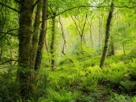 Prehistoric woods