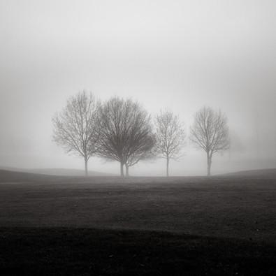 Misty Trees Berkshire I