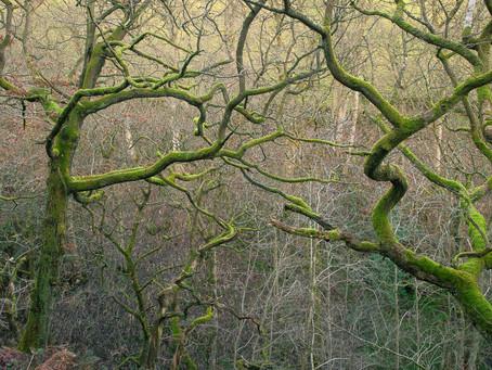 Heptonstall trees