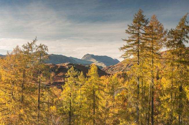 Autumn View to Bowfell 1