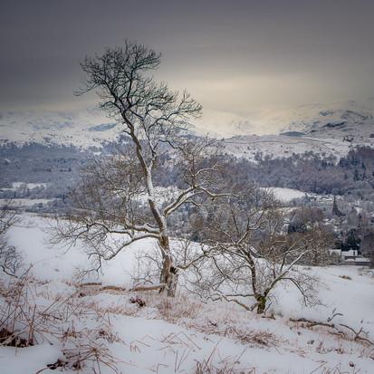 Wansfell Winter